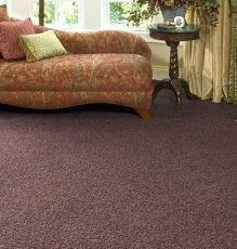 Photo Of Purple Colored Carpets With Chaise Lounge - Speedwell Design Center
